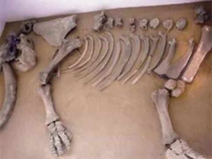 Huesos del mamut del metro Talismán